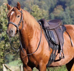 CKE_cheval